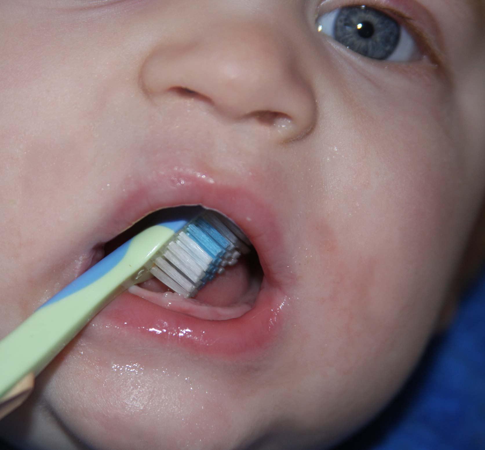 First teeth