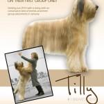 Tilly's-ad-copy-2