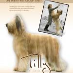 Tilly's-ad-copy-6