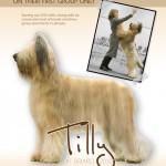Tilly's-ad-copy-6b