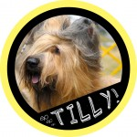 tilly badge3